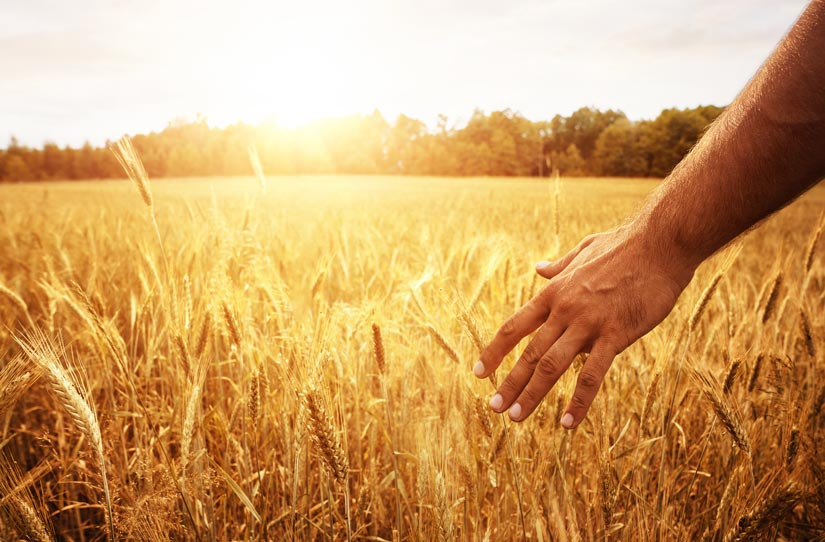 person standing on edge of golden field of wheat - neuroplasticity