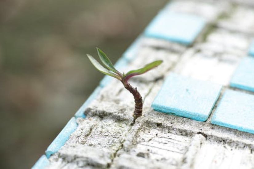 Plant growing from brick - hope