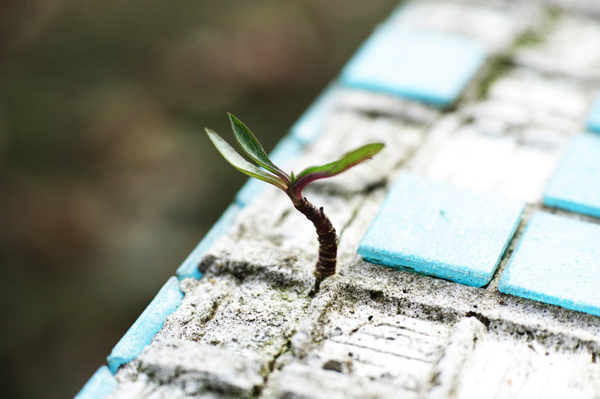 tiny seedling growing up through cracked tile - hope